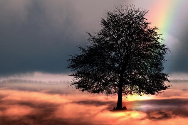 Traumdeutung am Beispiel Symbol Baum